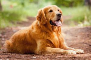 каталог собак с фотографиями